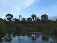 Castanhais da Amazônia podem ser herança de ocupação humana do período pré-colonial