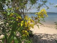 Projeto Praias Boraris, em Alter do Chão, alia ciência e conhecimento tradicional